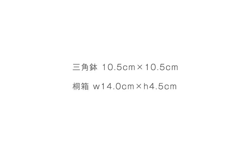 荒刷毛目 - 三角鉢 10.5cm×10.5cm - 桐箱 14.0cm×h4.5cm